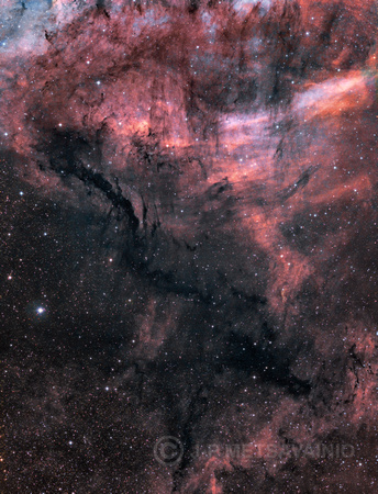Dark nebulae in Cygnus